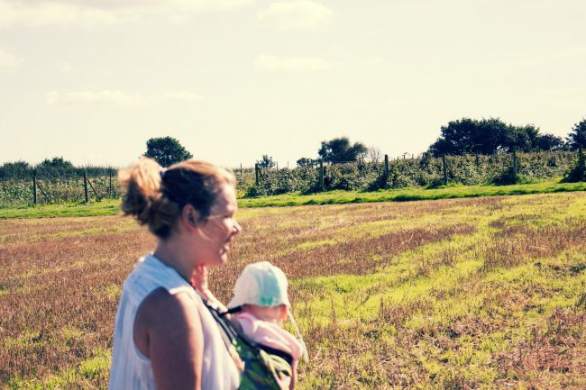 Fruit Picking Day Out with the Family