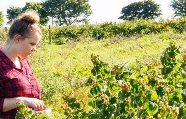 Fruits of Labor - Fruit Picking Warrington